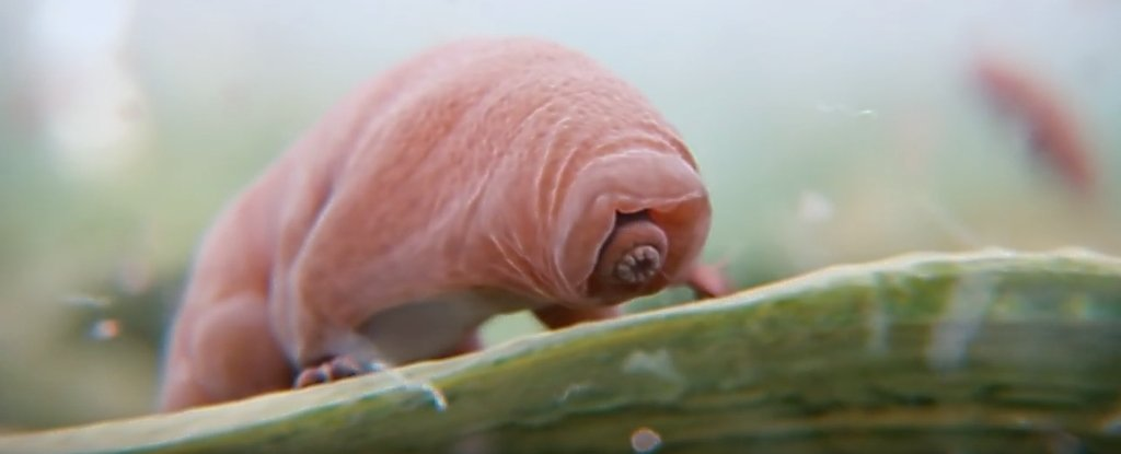 We Can Now Harness The Tardigrade's Strangest Superpower - And Give It to Other Organisms