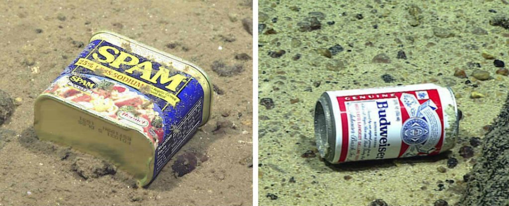 """""""Extraordinary"""" Levels of Pollution Have Been Found 10 km Deep in the Mariana Trench"""
