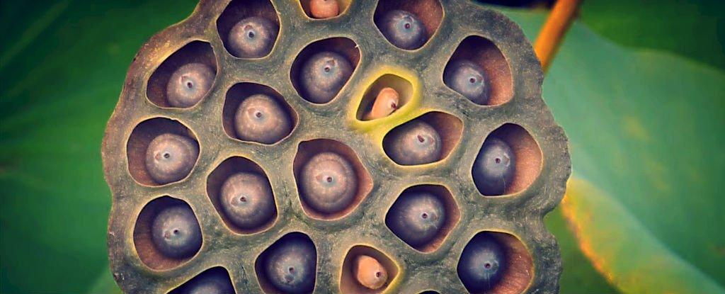 Understanding Trypophobia A Fear Of Holes