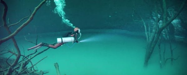 Divers Are Exploring This Giant Underwater River, Shrouded