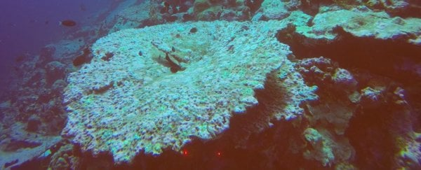 Scientists just discovered yet another coral reef devastated by global warming