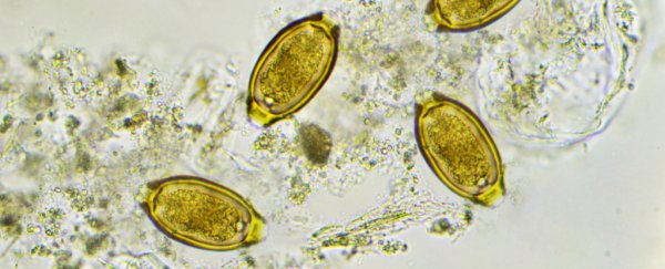 Parasitic Worm Eggs Might Soon Be Sold as a Food Supplement