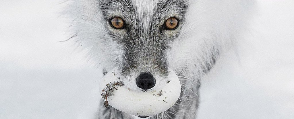 The Most Stunning Wildlife Photos of 2017 Are Here And Holy Crap
