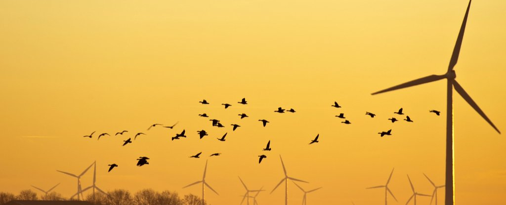 Here's Why Wind Farms Are Hardly The Bird Slayers They're Made Out to Be