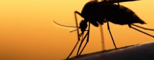 World's first malaria vaccine approved by European regulators