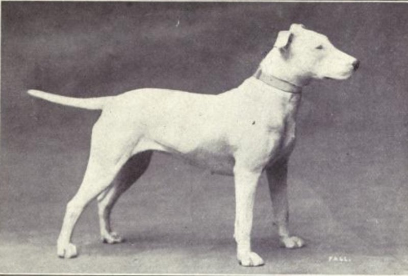 Dog Breeds Looked Like Before