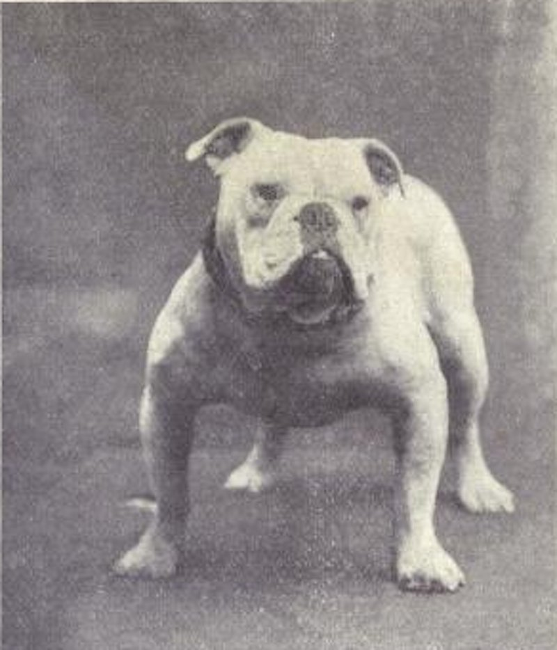 Here's What Popular Dog Breeds Looked Like Before And After