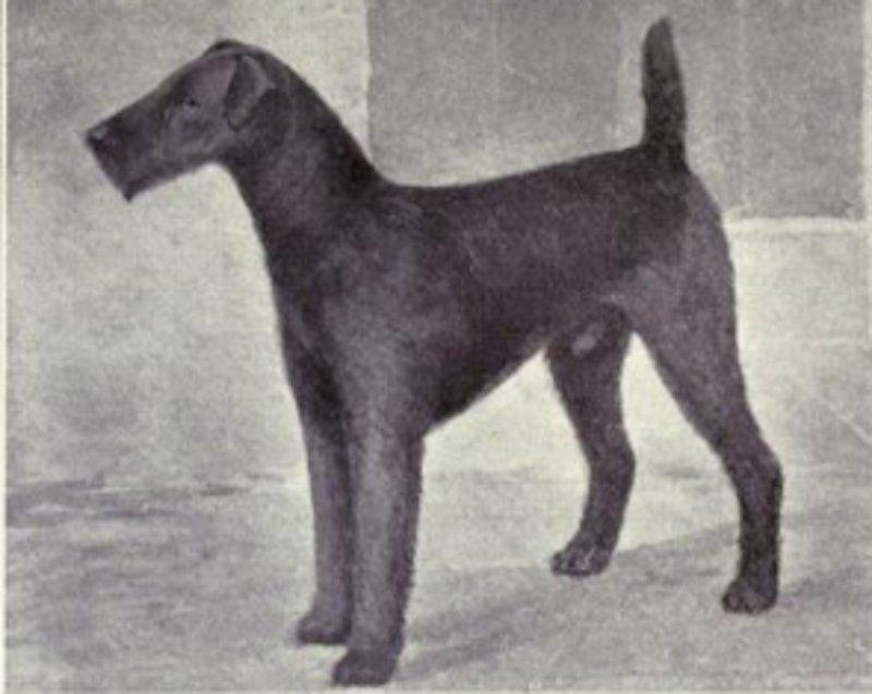 dog-7