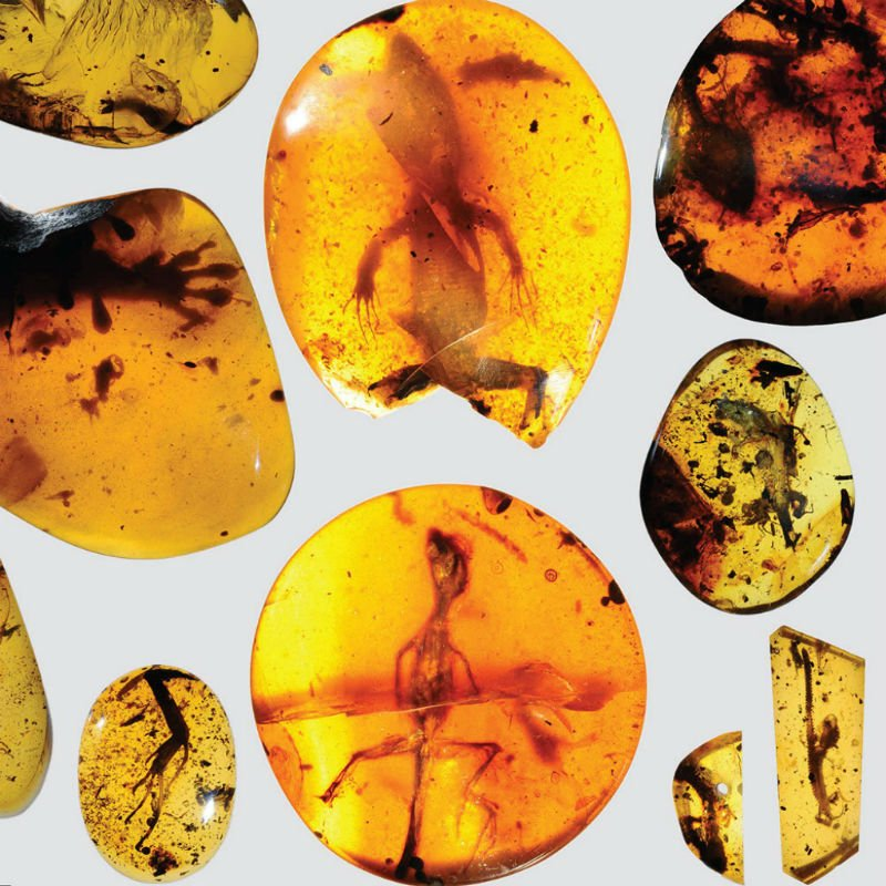 worlds-oldest-cham-specimens