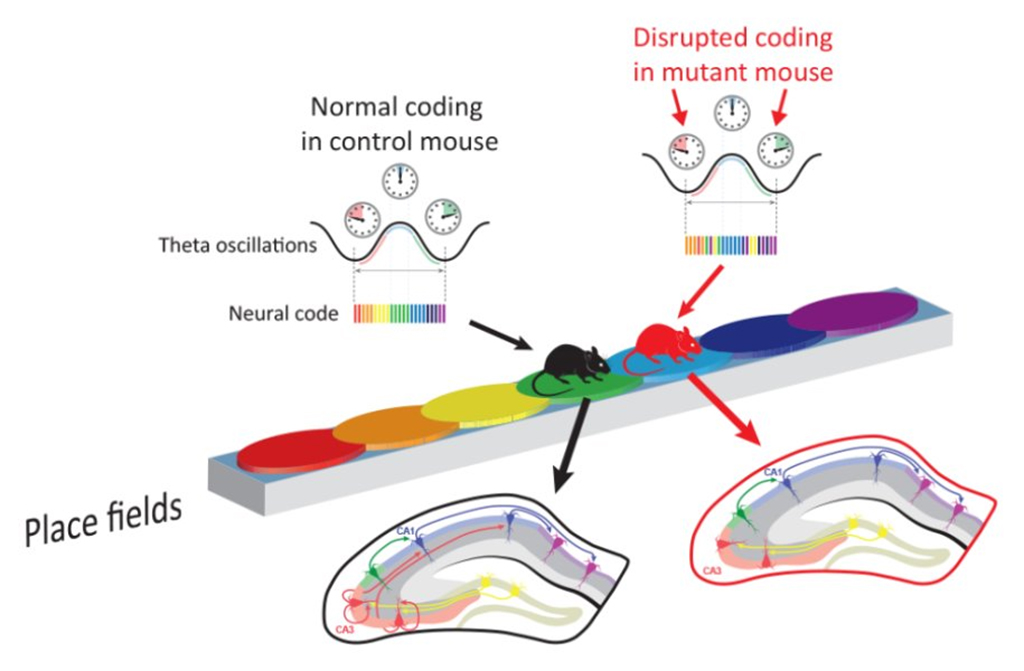 mouse-coding