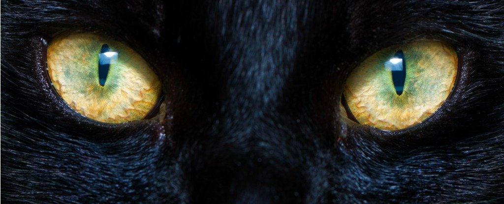 The Mystery of Cat Eyes