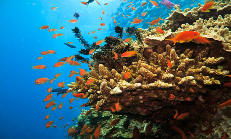 Geological processes rule coral reefs