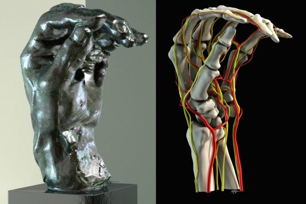 What Rodins Hand Sculptures Can Teach You About Anatomy