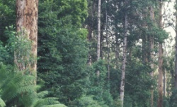 anu_forest-temperate.jpg