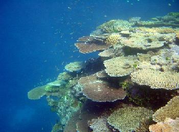 coral and algae relationship