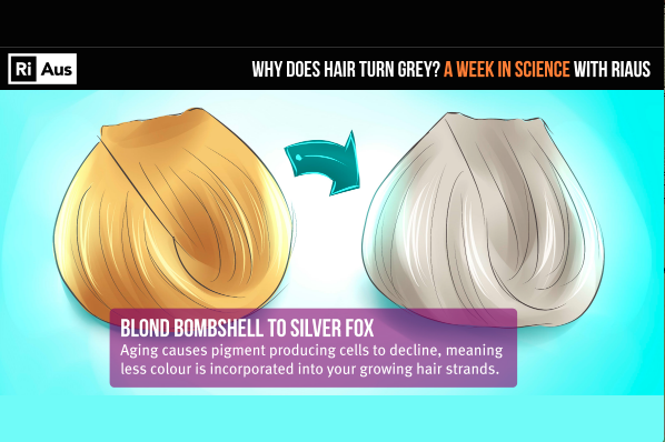 Watch Why Does Our Hair Turn Grey Sciencealert